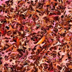 Red, orange, brown, and yellow leaves on the ground during autumn