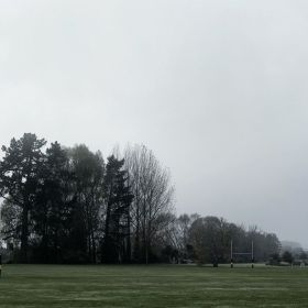 Tall trees shrouded in fog with a park in the foreground