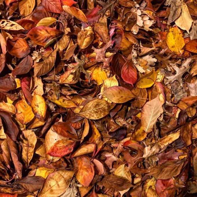 A whole range of brown, red, orange, and yellow leaves on the ground on an autumn evening