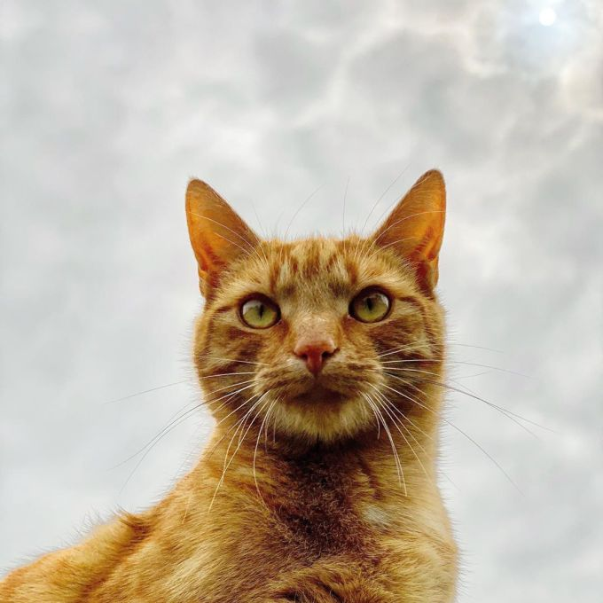 Jack the cat with the cloudy sky behind him