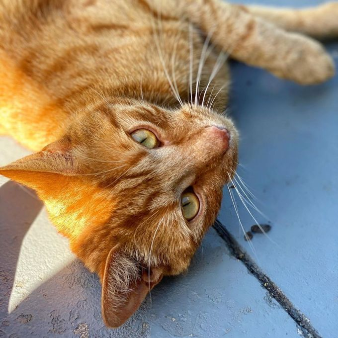 Jack the ginger cat lying on his side on the concrete