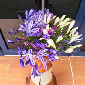 Various purple and white flowers in a traffic cone: a symbol of the Christchurch earthquakes