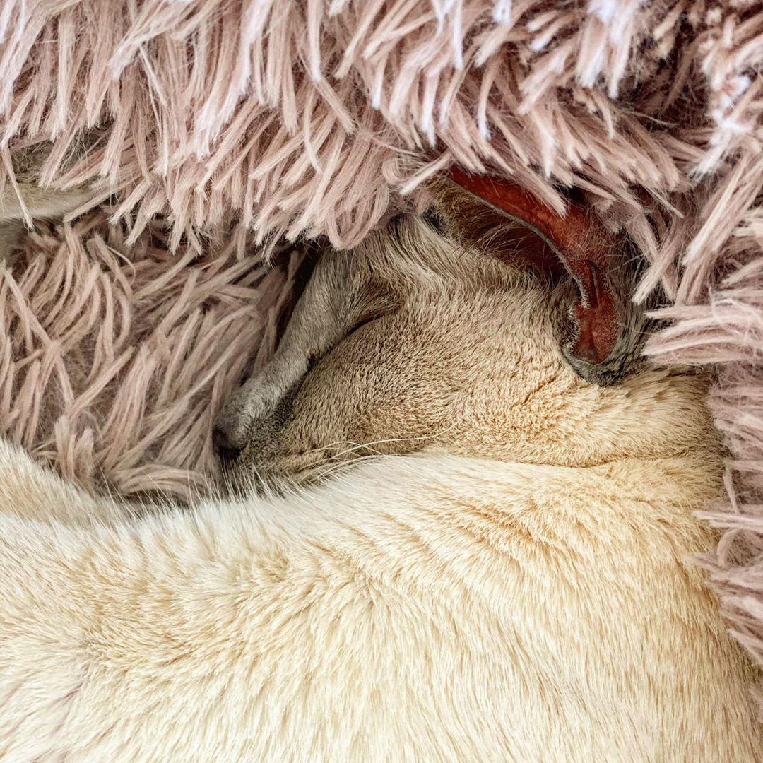 Sissy snuggled in her blanket 20 April 2020