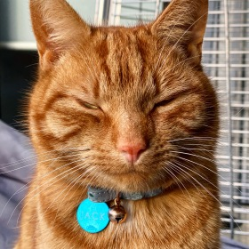 Ginger cat smiling with Jack on his name tag on 24 July 2020