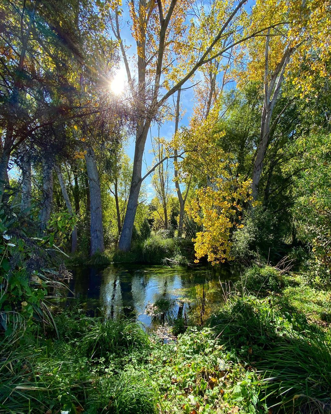 Styx river flowing through trees in the Styx Mill Reserve on a sunny autumn day in Christchurch, New Zealand