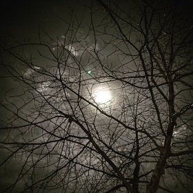 Moon poking through fog with a barren oak tree in the foreground in winter in Christchurch, New Zealand