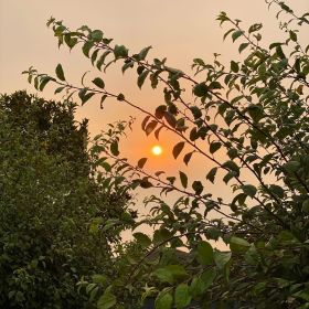 Sun looking orange in the sky with haze from fires on 2 February 2020, with trees to provide contrast