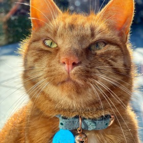 """Jack the ginger cat smiling with a new name tag saying """"Jack"""" on his collar"""