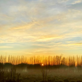 The sun is low on the horizon poking between a copse of tall slender bare trees while fog hangs low over the marshlands and the light blue sky is full of pastel yellow clouds in Marshlands, Christchurch, New Zealand