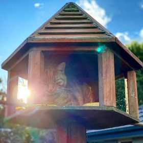 Jack the ginger cat sitting inside the bird feeder while the sun shines behind him