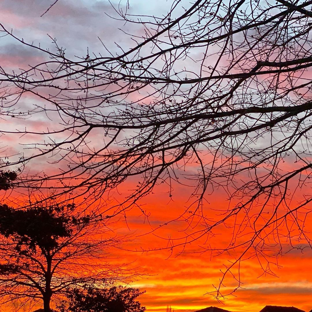 Orange and yellow and purple clouds as the sun rises with various tree branches in the foreground and background