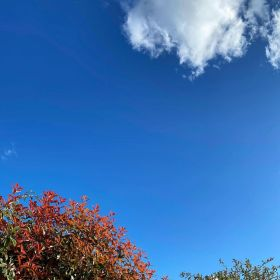Blue skies with bushes with leaves at the bottom and a cloud in the sky at the top