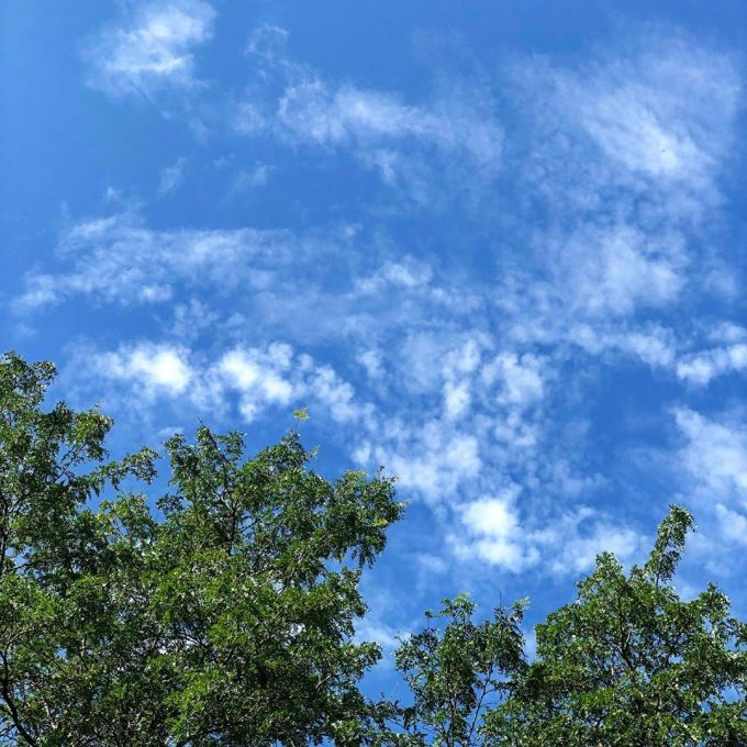 Blue skies with a few small clouds high in the sky with green leafy trees in the foreground