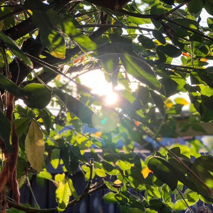 Sunlight shining between branches full of green leaves