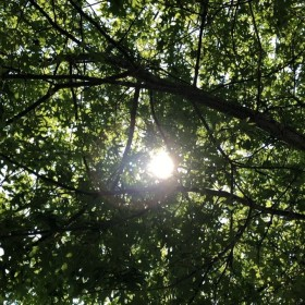 Sun peeking through green leaves and tree branches