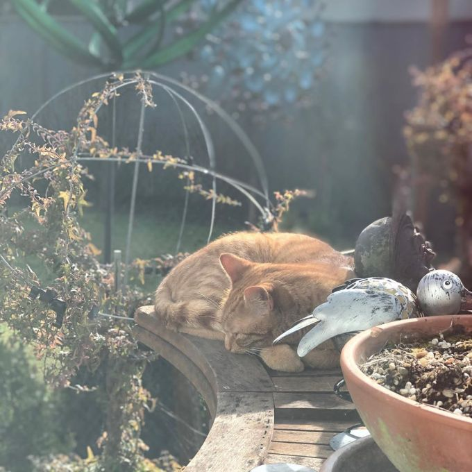 Jack the ginger cat sleeping on a wooden outdoor bar amongst small statues and pots and greenery