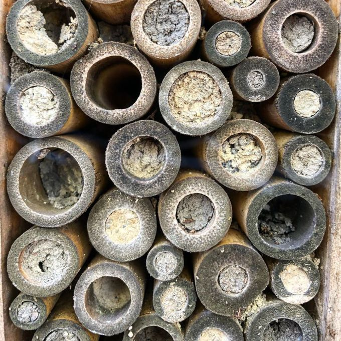 Bee hatchery with various tubes facing outwards so bees can create safe spaces inside for baby bees