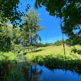 The Styx River flows between trees into a clearing with blue skies and tall, green trees in the background in the Styx Mill Conservation Reserve in Christchurch, New Zealand