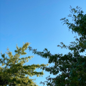 Blue skies as the sun shines on one green-leafed oak tree and another oak tree in the foreground is in shade