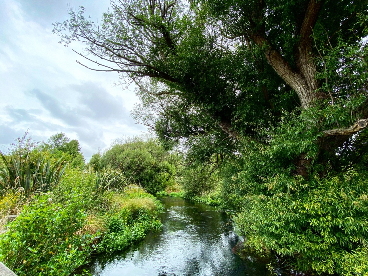 The Styx River flows between native grasses and plants with a large, old tree on the right bank in the Styx Mill Conservation Reserve in Christchurch, New Zealand