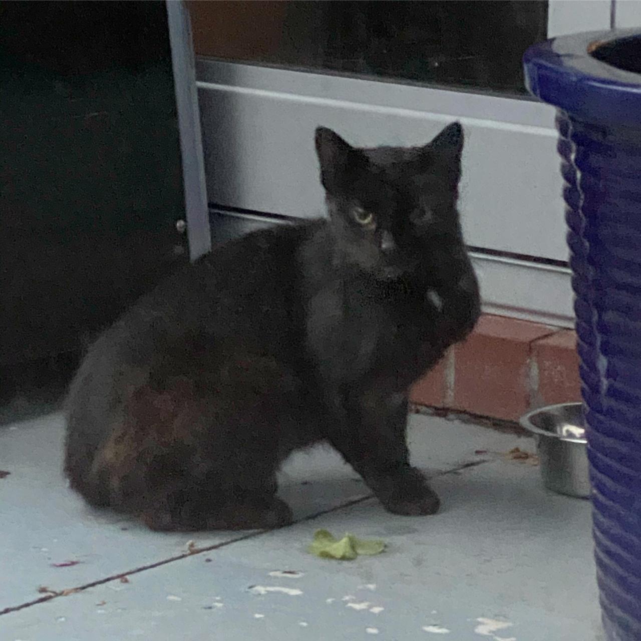 A black kitten sitting near the food bowl we gave it