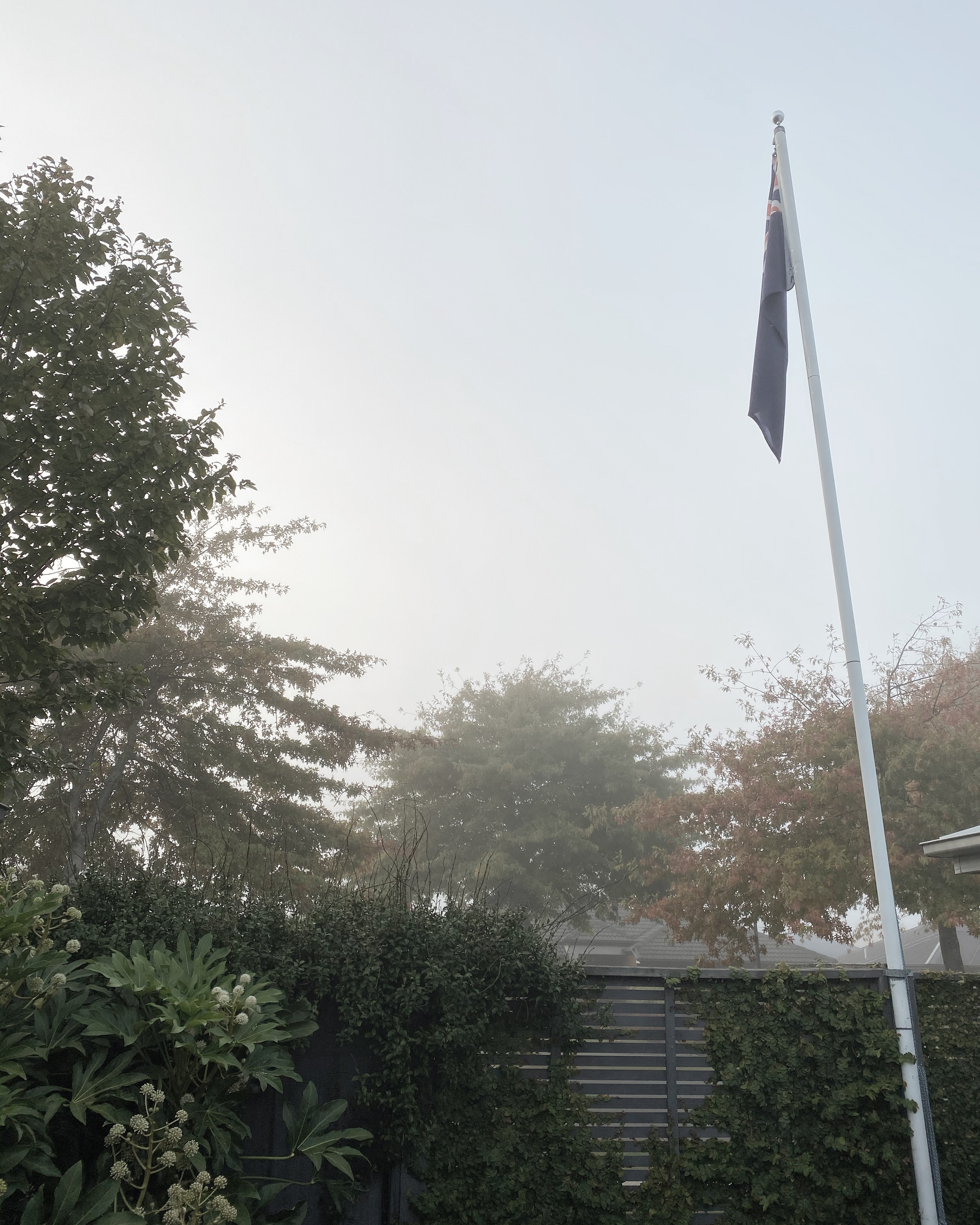 Oak trees and flag pole with New Zealand flag on it slightly obscured by fog on an autumn morning