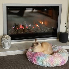 Sissy the lilac point Tonkinese cat lays in her multicolored cat bed in front of the new landscape fireplace we installed